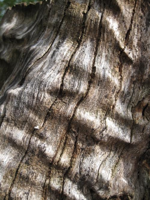 tree_ruffle