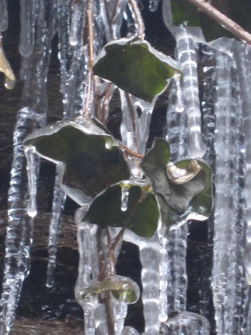 ivy_ice